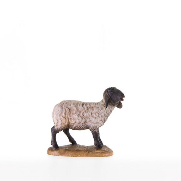 Standing sheep with black head