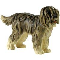 Shepherds dog