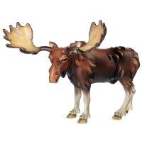 Moose - elk
