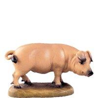 Schwein D.K.